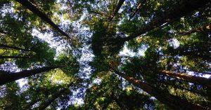 forêt environnement
