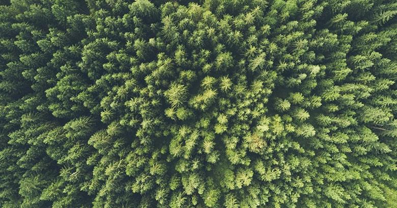 Sommes-nous contraints de compter sur les épidémies pour réduire les émissions de CO2 ?