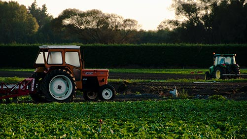 agriculteur qui récolte sa production