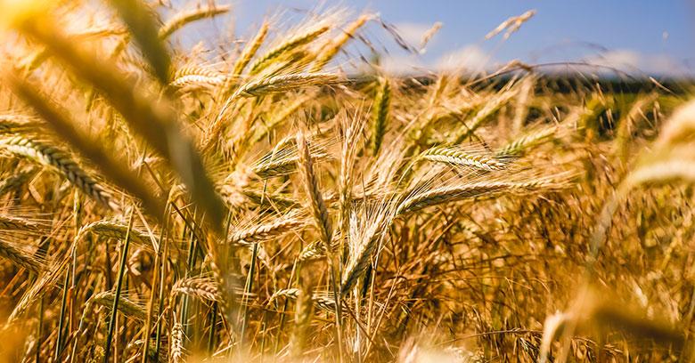 Agriculture intensive : c'est quoi exactement ?