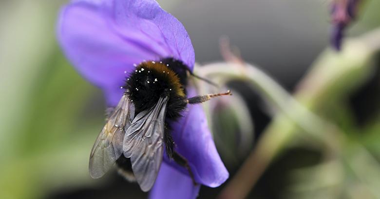 Quel est l'impact des pesticides sur l'environnement ?